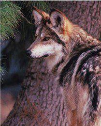 Photo Courtesy of the AZ Zoological Society