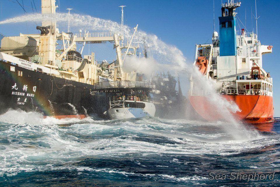 japanese clash with sea shepherds