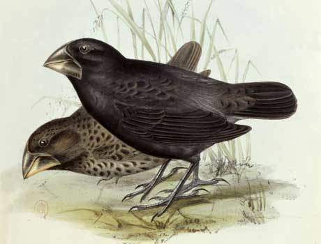 finches.article