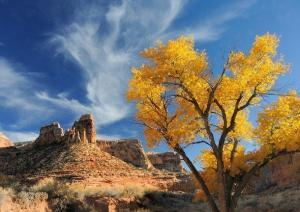 Fall colors in the San Rafael Swell. © Leslie Scopes Anderson.