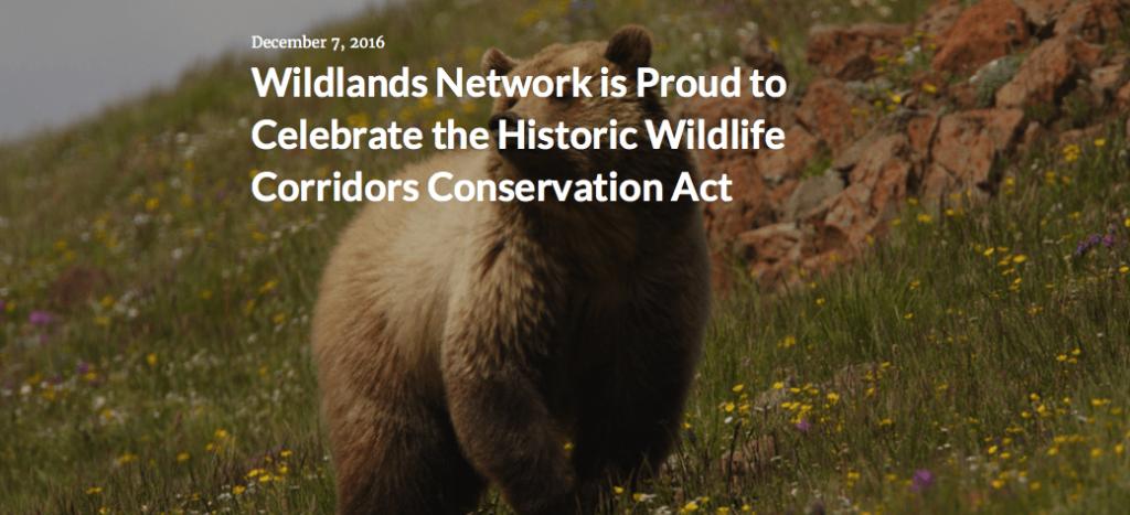 Wildlands Network is Proud to Celebrate the Historic Wildlife