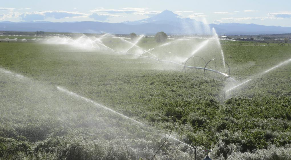 Alfafa and irrigation sprinkers near Bend, OR c/o George Wuerthner