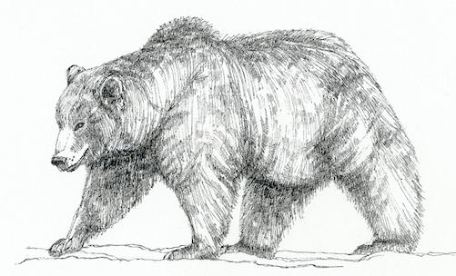 Grizzly c/o Susan Morgan