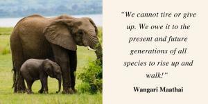 Wangari Maathia quote, c/o Suzanne York
