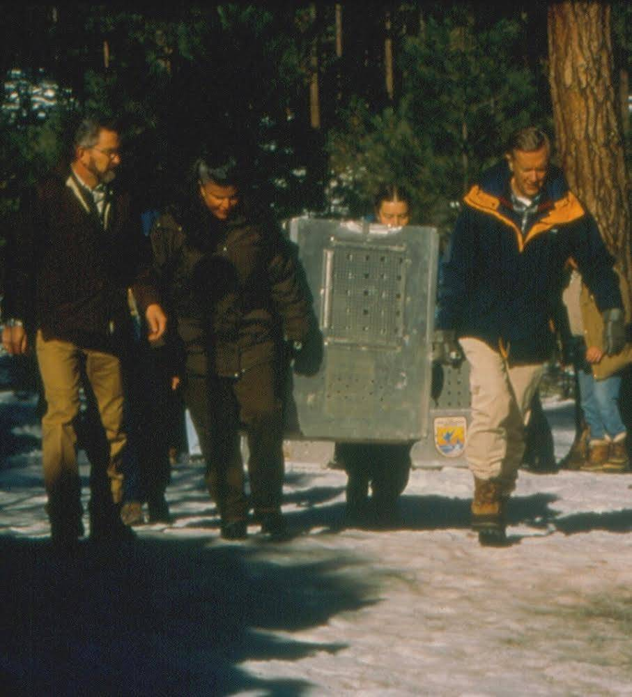 Dave Parson and Secretary Babbit (right) releasing first Mexican Wolves, 1998
