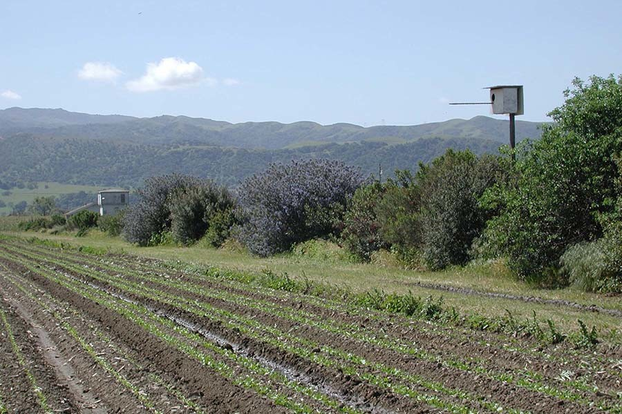 Foster Ranch Hedge & Barn Owl Box c/o WFA