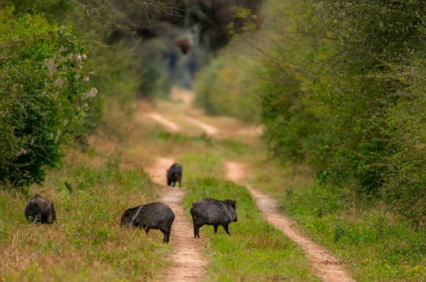 Impenetrable, tapir c/o Matias Rebak