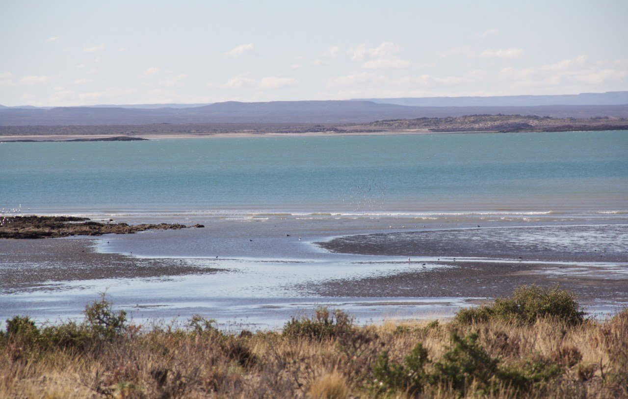 Patagonia Astral c/o CLFA