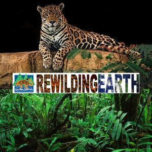 Rewilding Earth