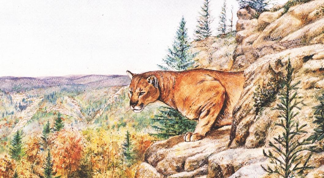 Cougar (c) Brad Basil