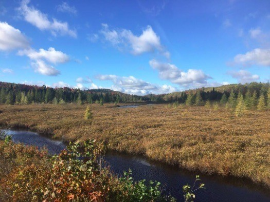 A boggy stream — good Moose habitat —meanders between ponds west of Little Tupper Lake, central Adirondacks.