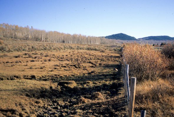 Cow battered wetlands, Upper Green River Valley, Bridger Teton National Forest, WY, (c) George Wuerthner