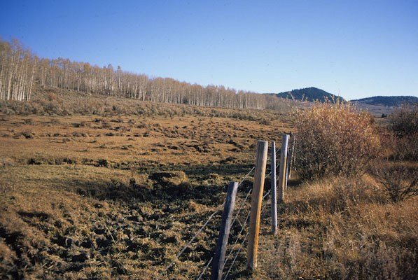 Fenceline contrast of overgrazed riparian area, Upper Green River Valley, Bridger Teton National Forest, WY (c) George Wuerthner