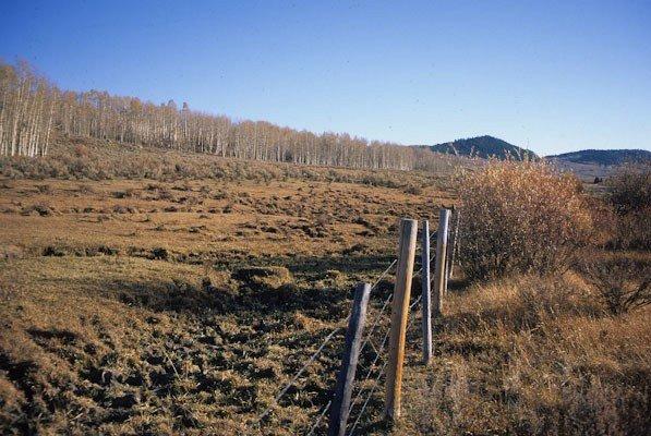 Fenceline contrast of overgrazed riparian area, Upper Green River Valley, Bridger Teton National Forest, WY (c) George Wuerthner