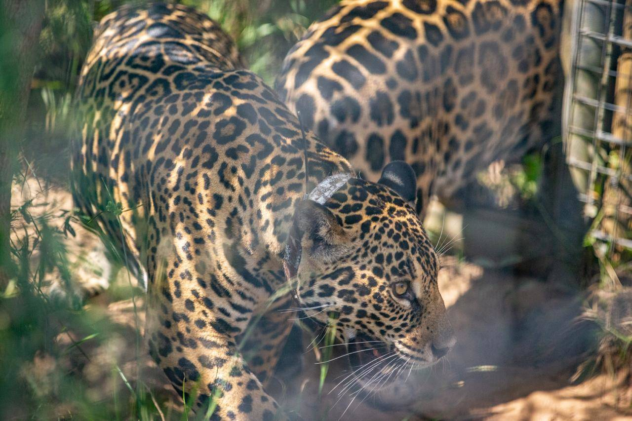 Juruna and Mariua Exploring their new'territory'