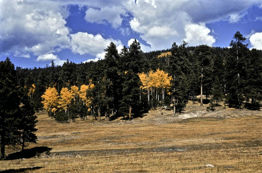 Peralta Canyon, Jemez Mts, Santa Fe NF, NM © Dave Foreman