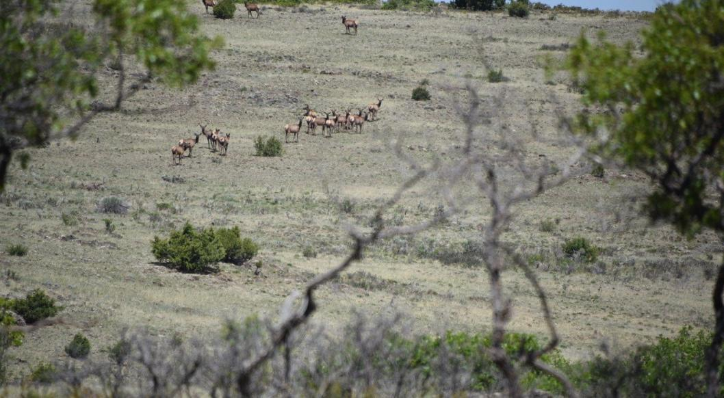 Elk Migrating across Cerro de la Olla © John Miles