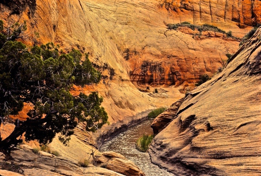 Deer Creek tributory to Escalante © Dave Foreman