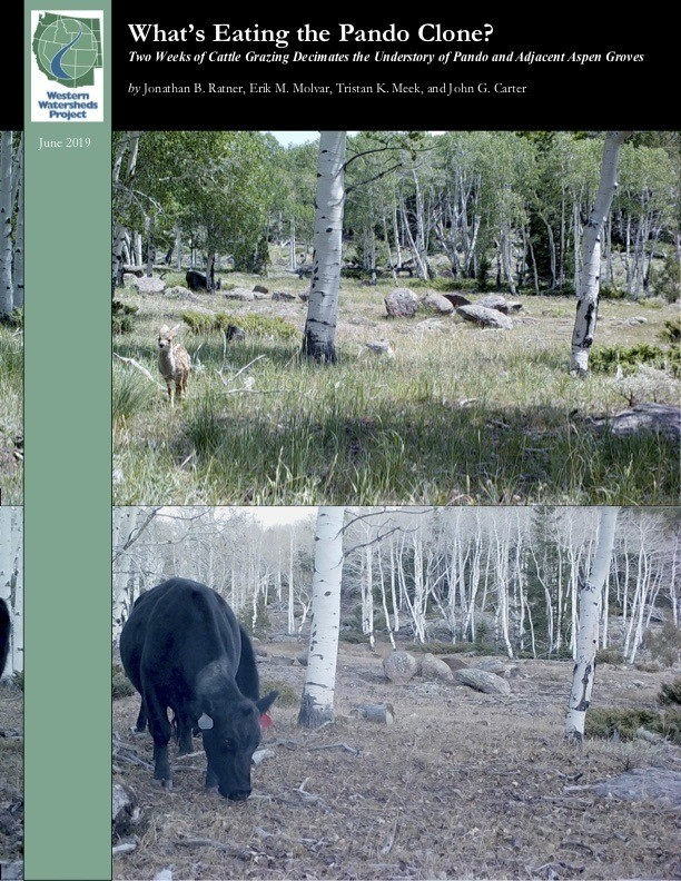 Figure 5. The damning and well-documented report from the Western Watersheds Project (worthy of a donation from you). Take a moment to study the before and during cow-bombing pictures. Source: Western Watersheds Project.