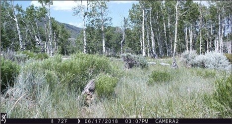 Figure 7. Camera 2 on June 17, 2018, at 72o. Summer starts in a few days. Source: Western Watersheds Project