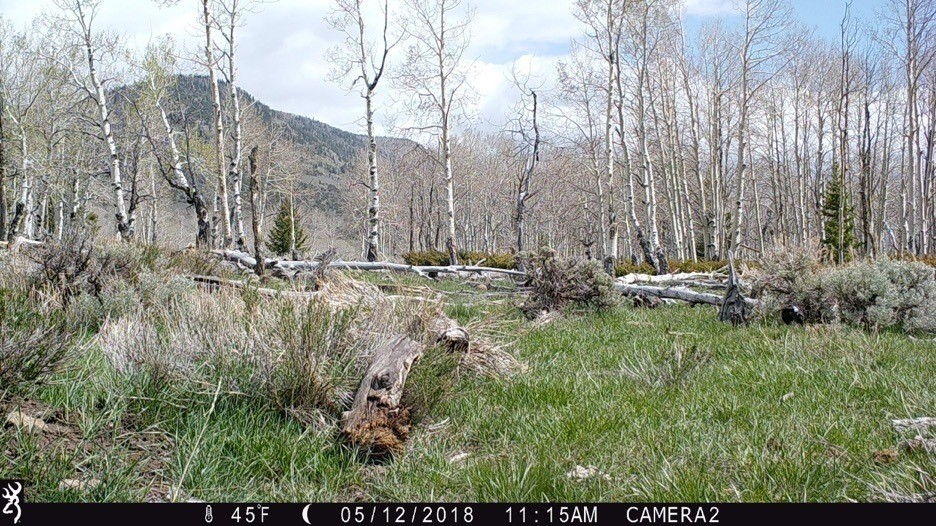 Figure 6. Camera 2 on May 12, 2018, at 45°F. Spring hasn't yet fully sprung, but it is springing. Source: Western Watersheds Project