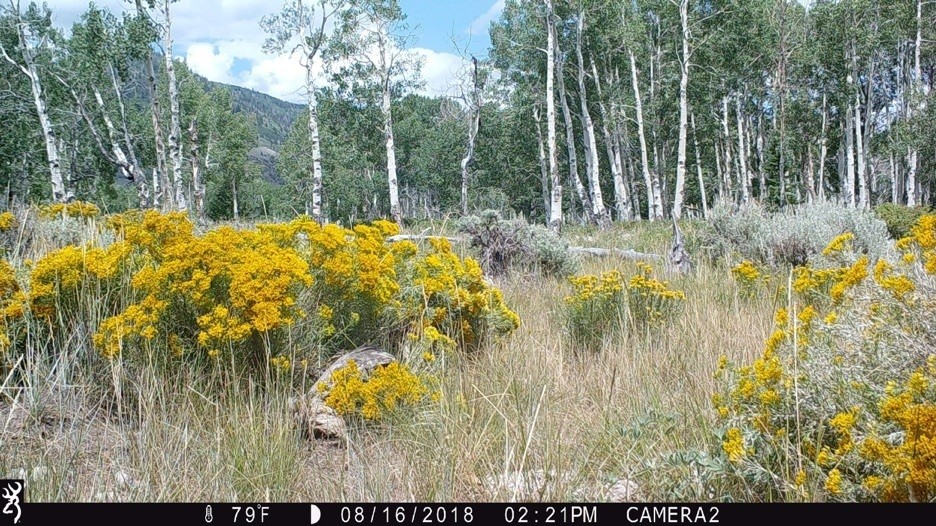 Figure 8.Camera 2 on August 16, 2018, at 72°F. Summer well under way.Source:Western Watersheds Project.