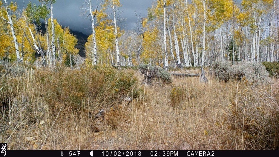 Figure 9. Camera 2 on October 2, 2018, at 54°F. The aspens are turning and the grasses are curing, just before the cattle arrive. Source: Western Watersheds Project.