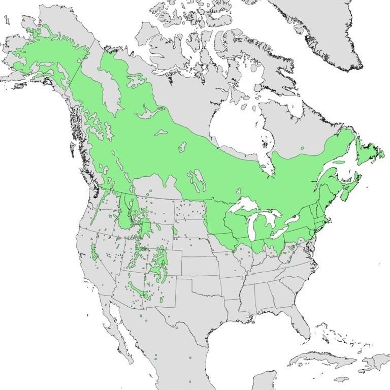 Map 1.The range of quaking aspen (Populus tremuloides).Source:Wikipedia.