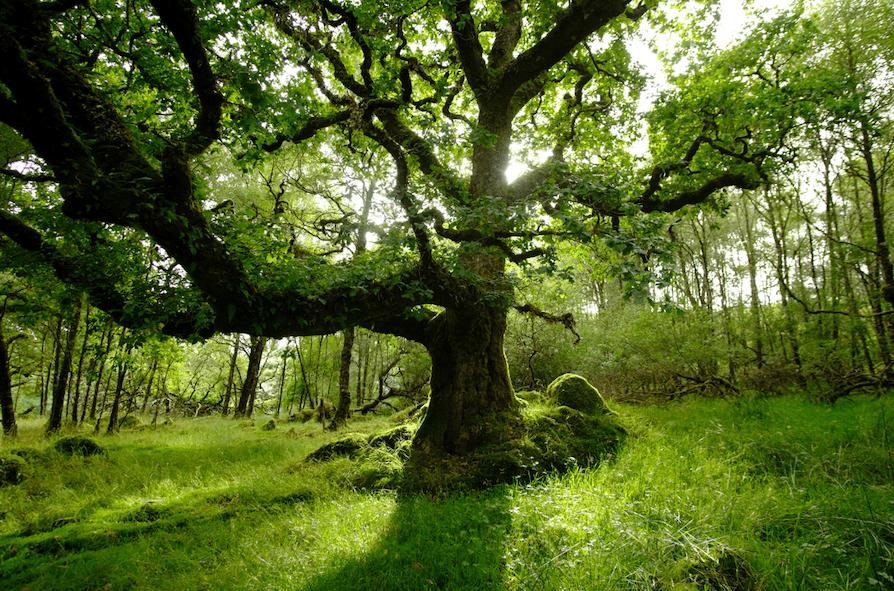 Remnant oak stand © Kenyon Fields