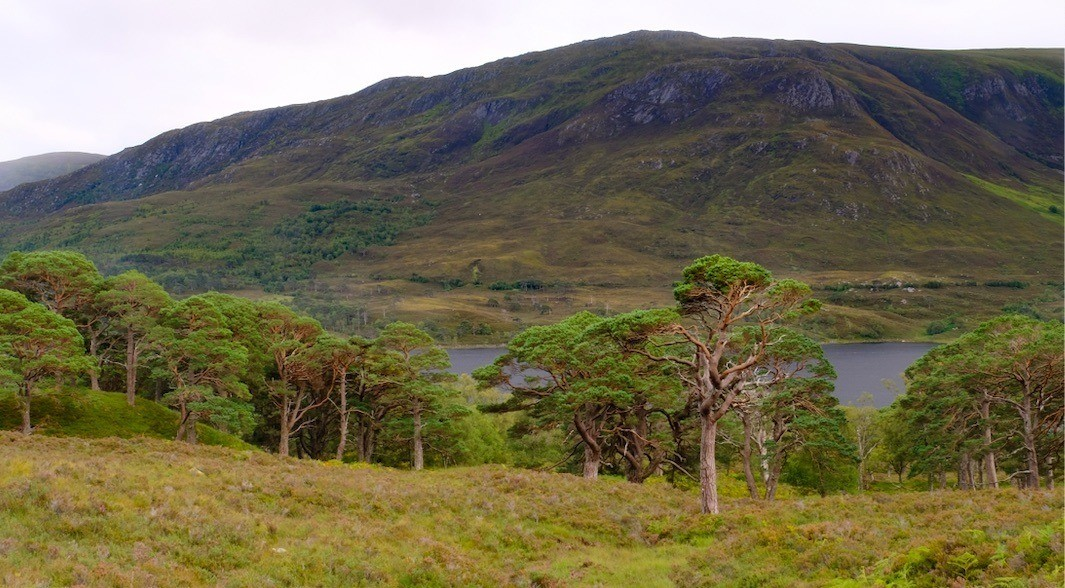 Remnant Caledonian pine forest © Kenyon Fields