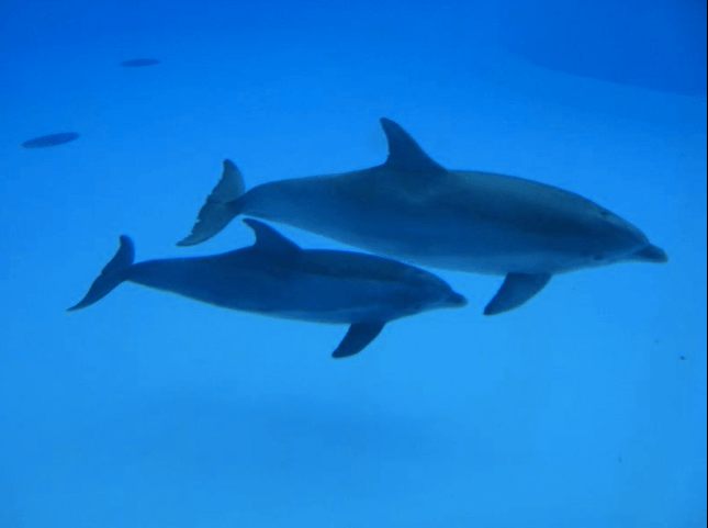 Dolphins, Parc Asterix, Paris, France, Wikimedia Commons