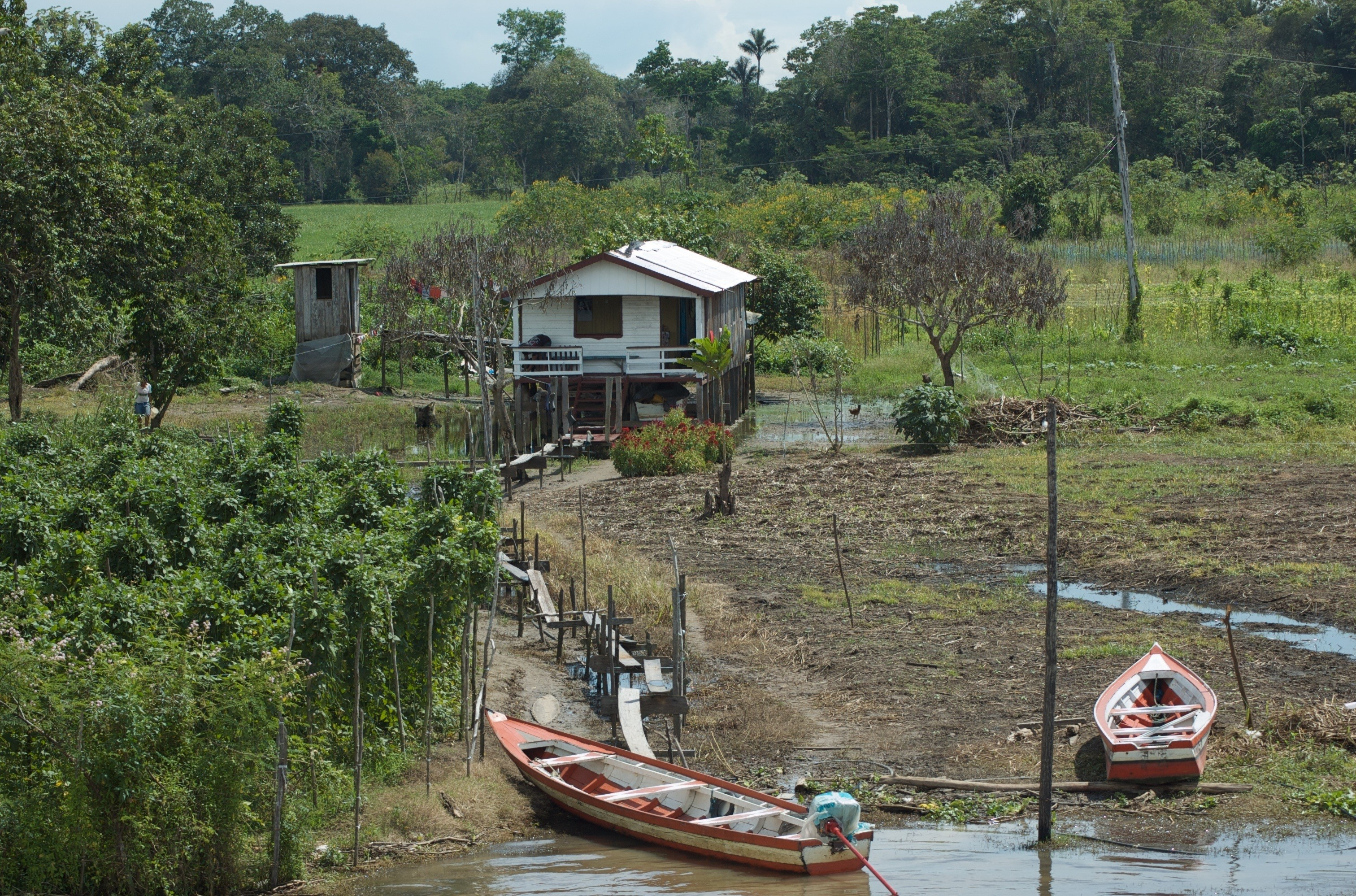 Farm and home along Amazon upstream of Manaus © Dave Foreman