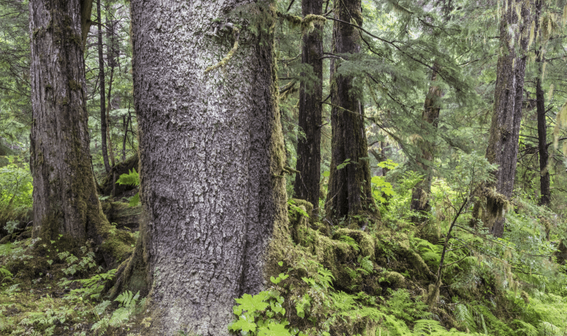Tongass National Forest © Crossroads Photography