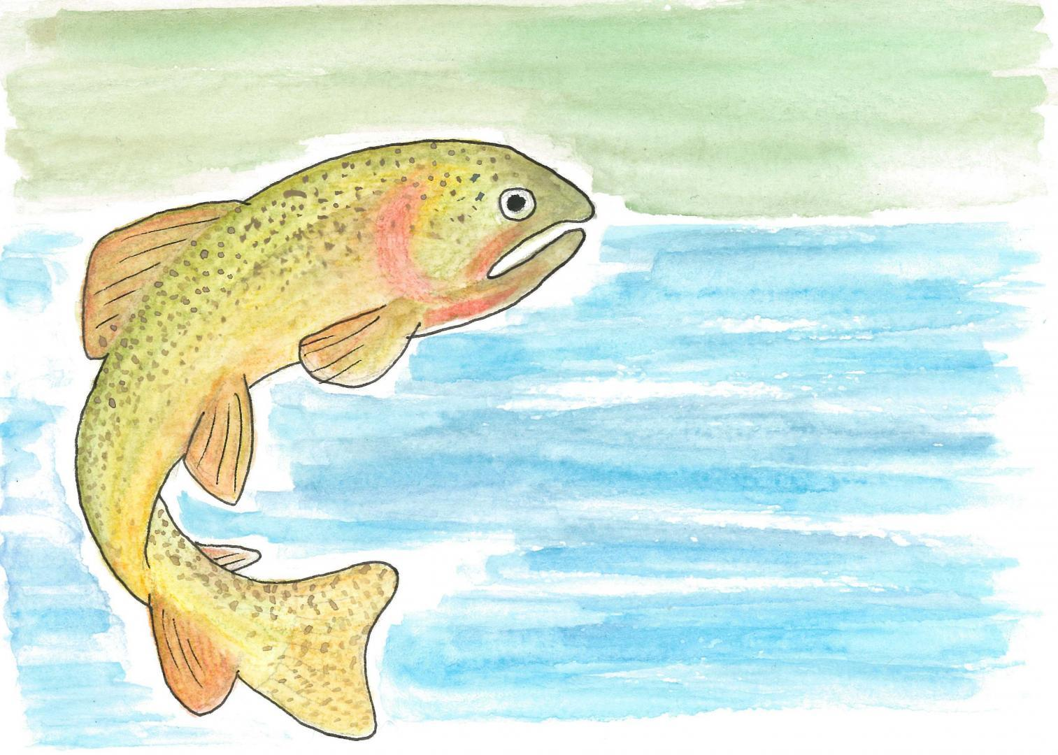 Snake River Fine-Spotted Cutthroat Trout © KIT West Designs