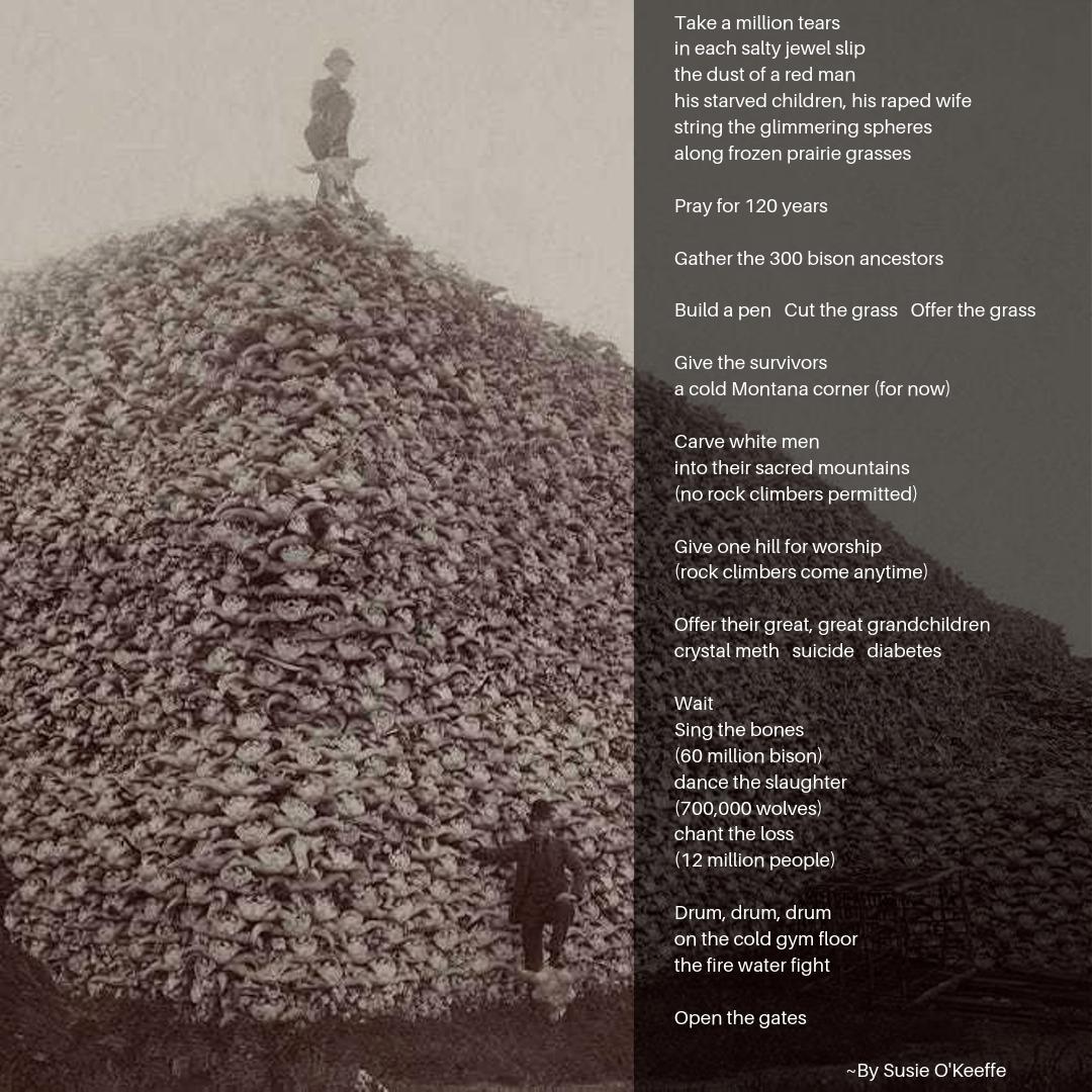 okeeffe-bison