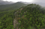 Diverse team of ecologists help save the Box Creek Wilderness: a Southern Appalachian biological hotspot