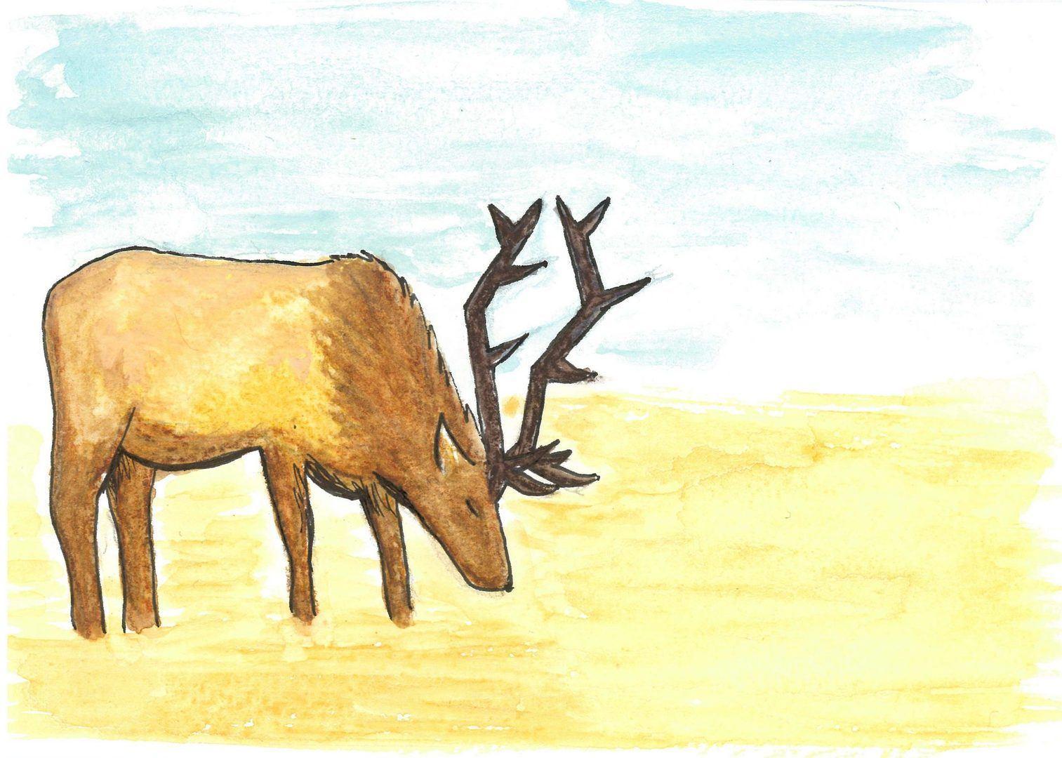 Rocky Mountain Elk © KIT West Designs