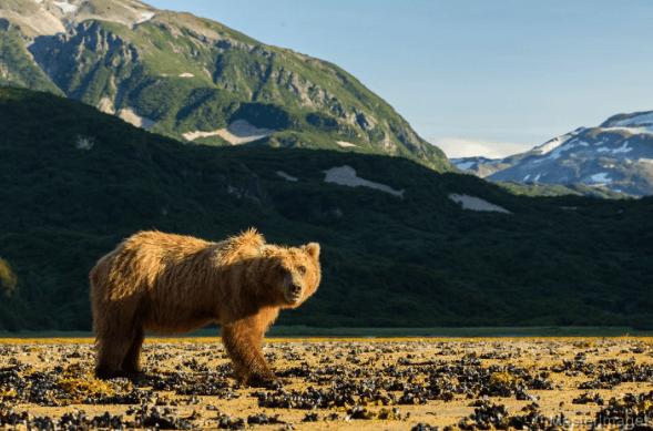 Brown Bear © MasterImages