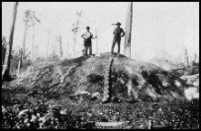 Charcoal hearth, uncertain location, ca 1900, courtesy of Edinburg, VA office of U.S. Forest Service