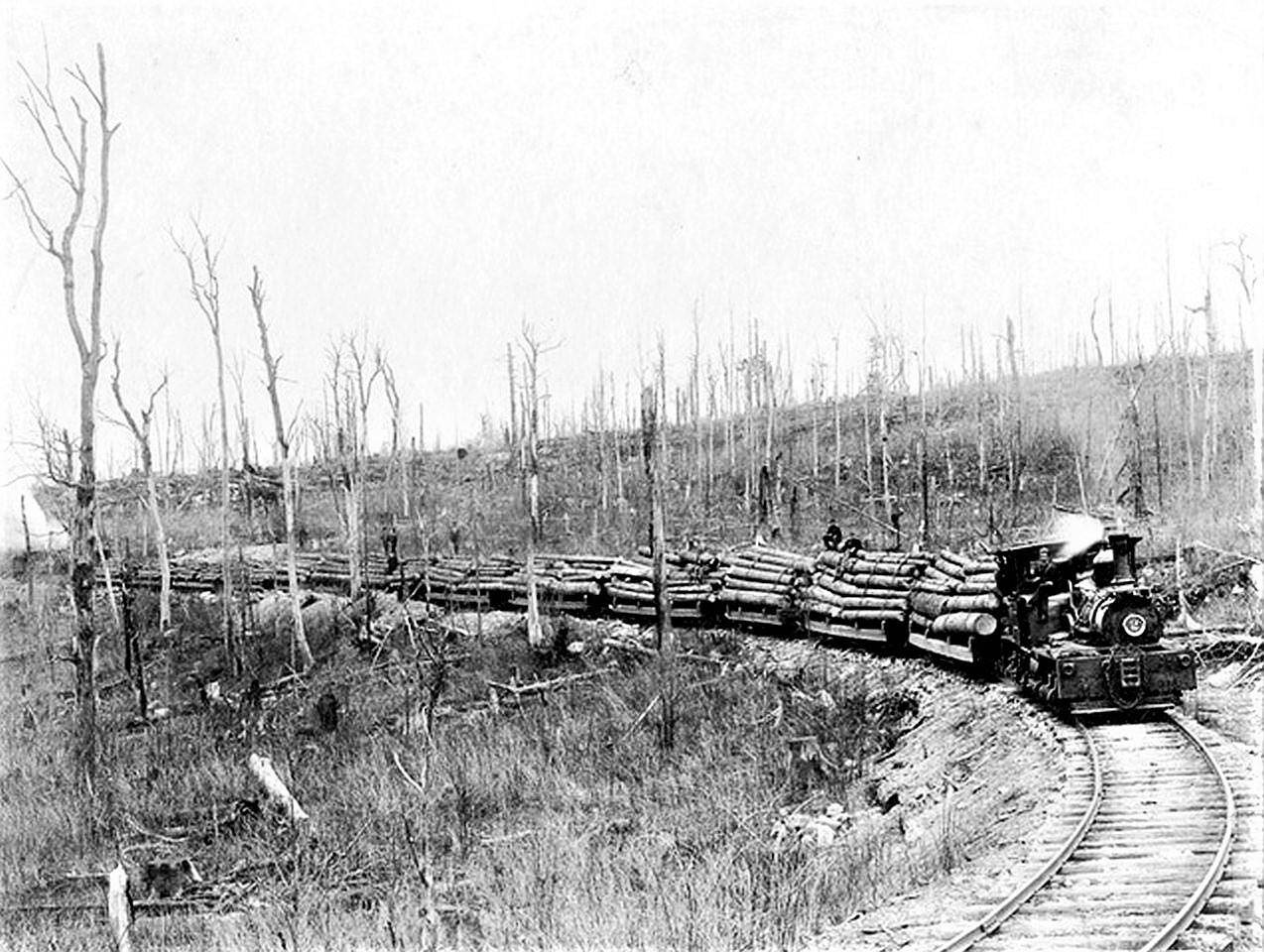 Logging train near Dobbin, WV, Encyclopedia image