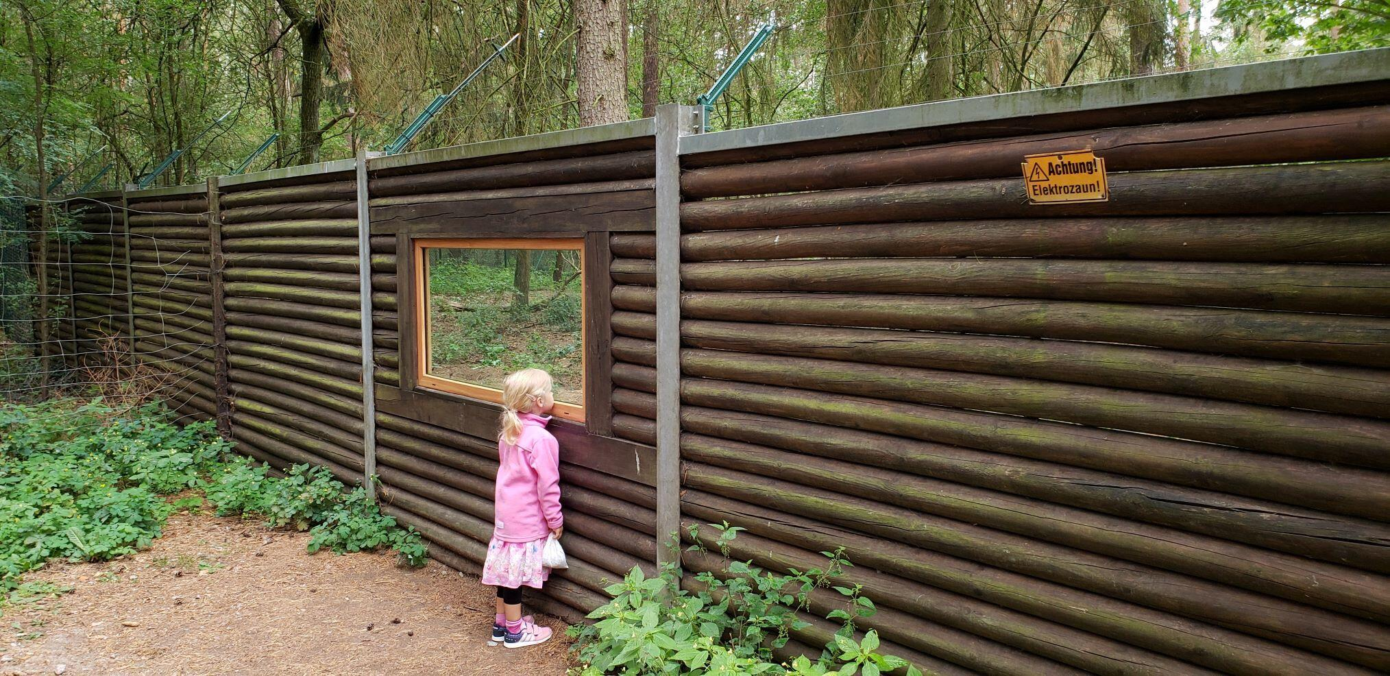 Holger's granddaughter looks into the wolf enclosure at the Perleberg Zoo in Brandenburg, Germany © Chris Bolgiano