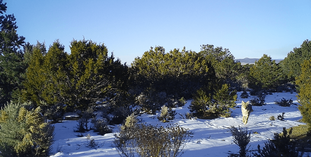 Pinon-Juniper Woodlands © John Miles