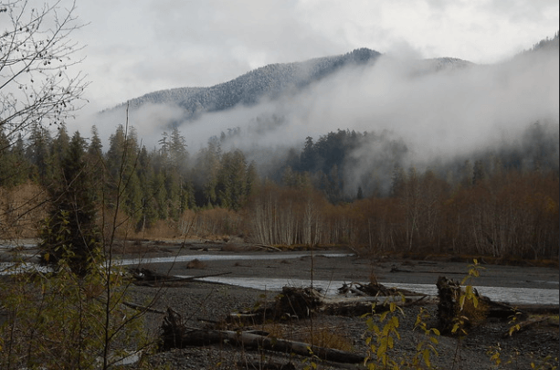Hoh Valley, courtesy of Olympic National Park