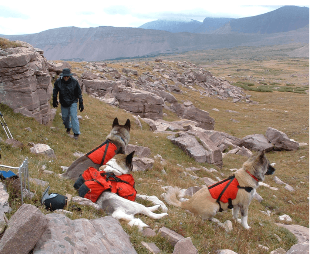 John Carter and his Akita helpers doing research on the effects of sheep grazing in the High Uintas Wilderness.