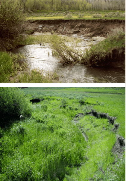 Sleight Creek 2 & 13 years after livestock excluded