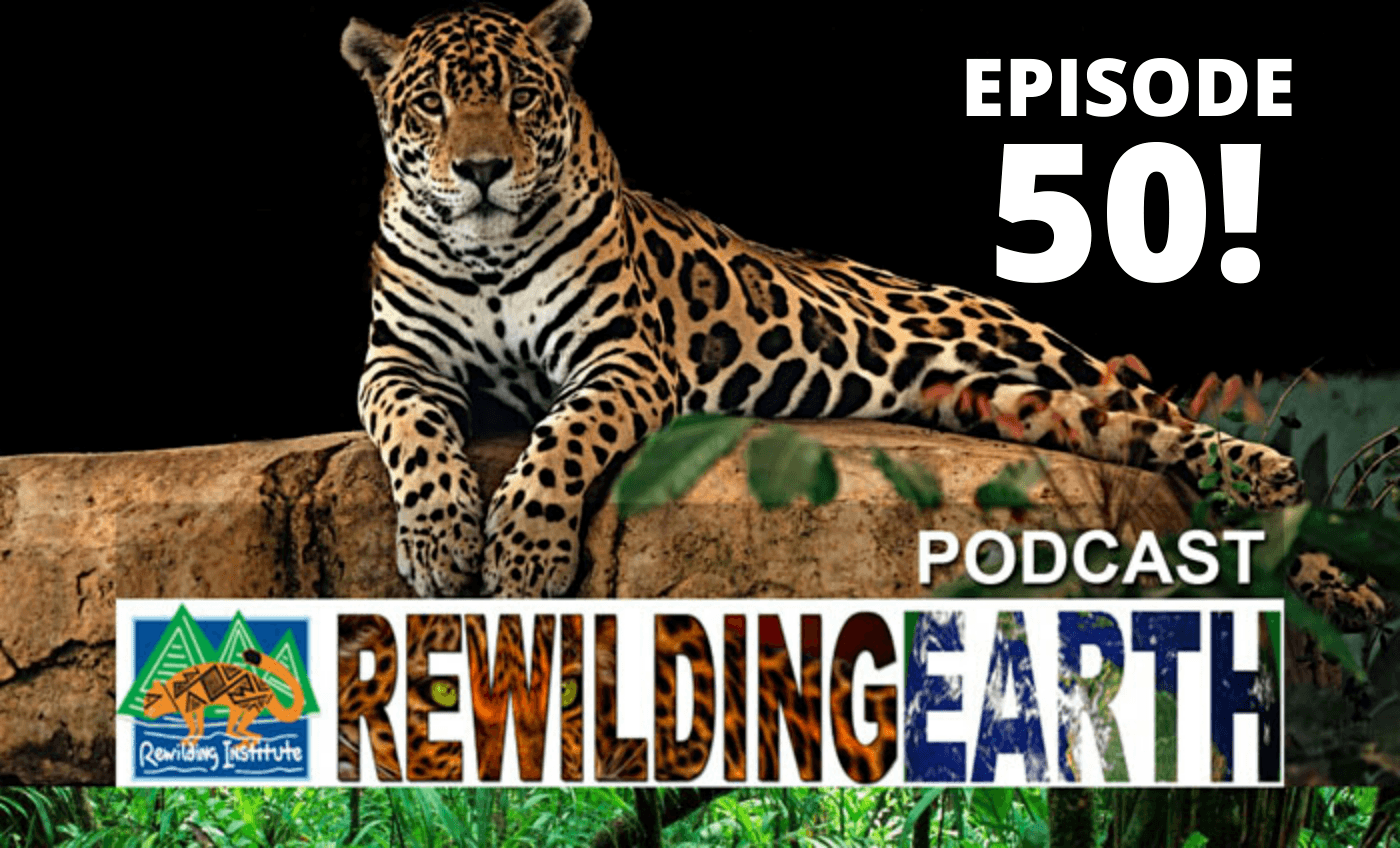 rewilding earth podcast 50th episode