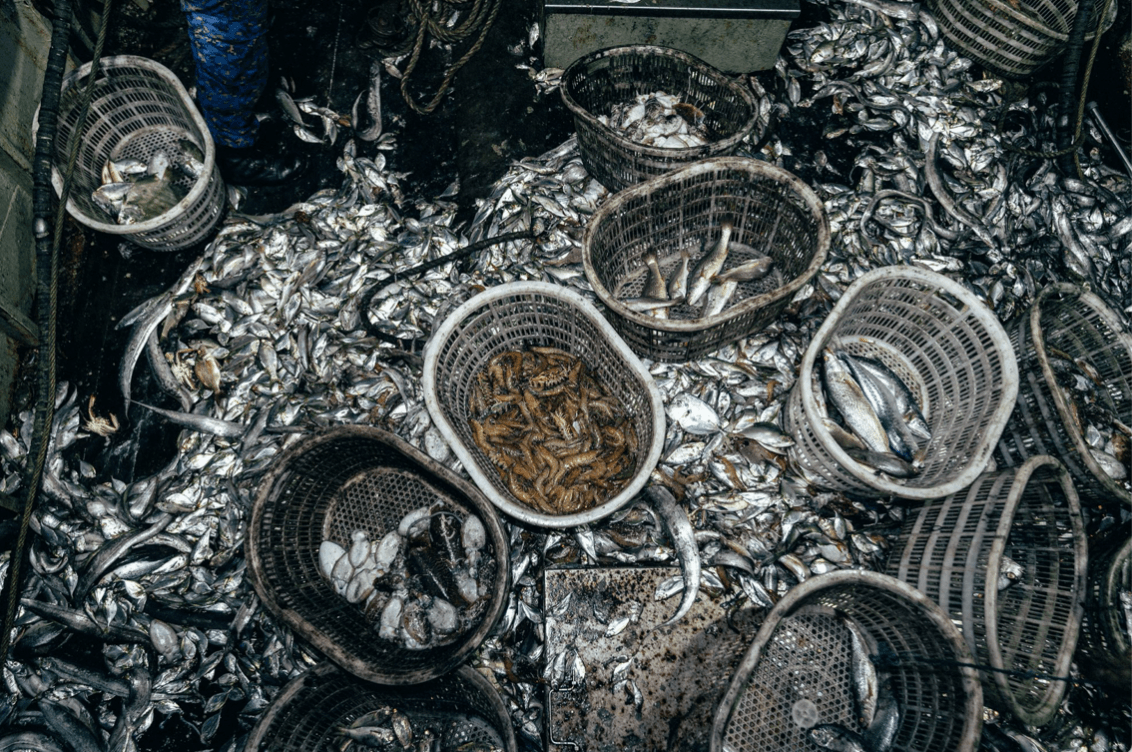 Piles of small fish caught by a trawler operating illegally in a protected area off the Gambia's coast (Image © Leon Greiner / Sea Shepherd)