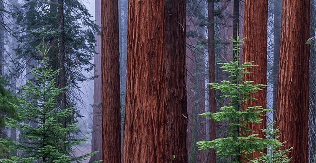 Sequoia Sequoia-Kings Canyon NP