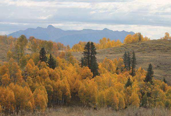 Hubbard Park Gunnison National Forest Colorado