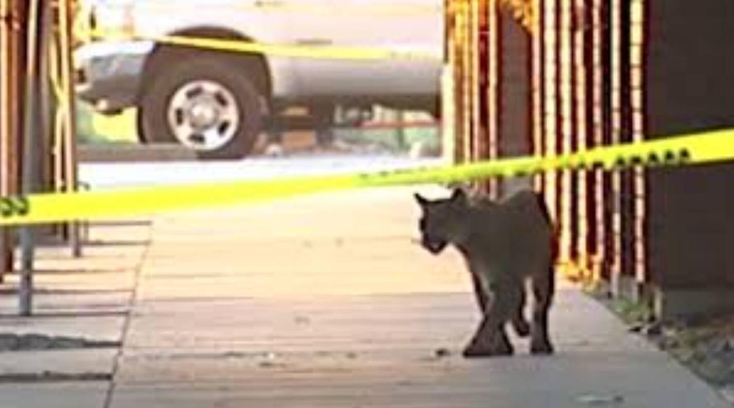 Lion San Francisco during epidemic